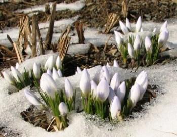 mud_season_snow-500x375